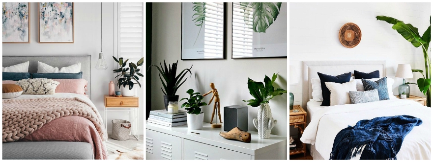 Plants in the home inspiration