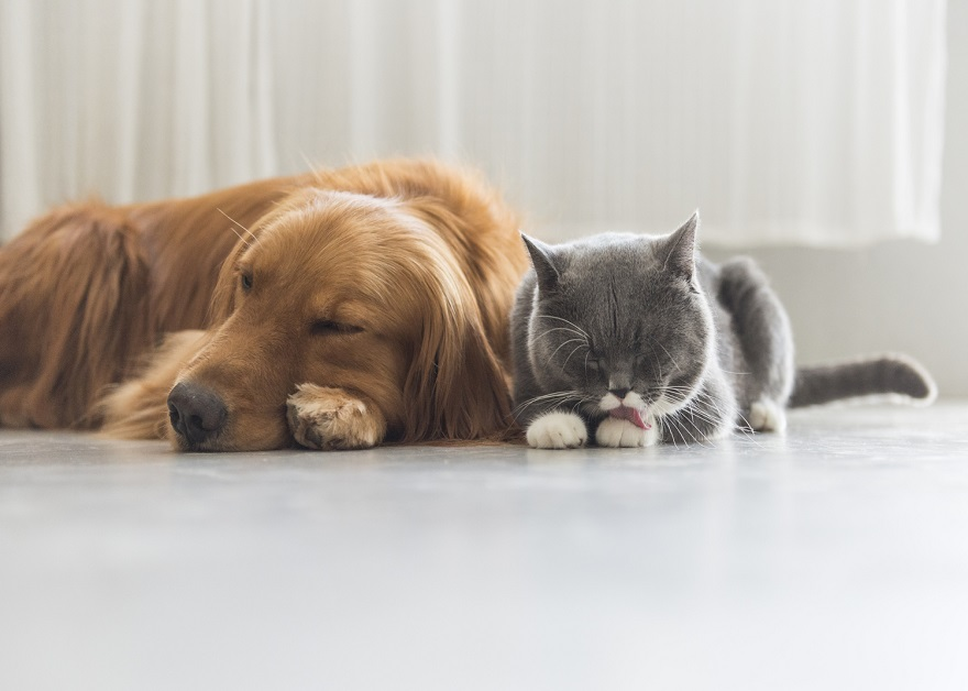 Cat and dog relaxing at home